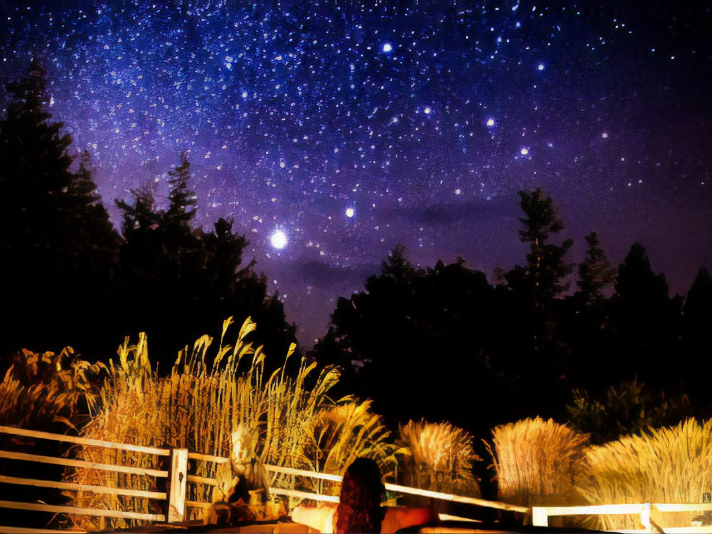 A close up of a mans face with fence in the night sky at WildSpring Guest Habitat.