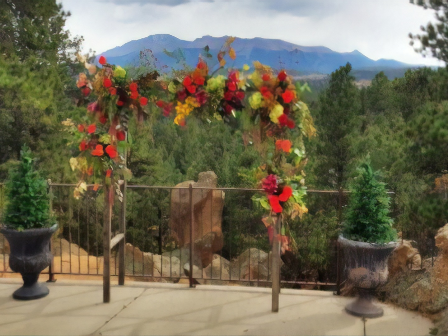 A vase of flowers on a tree at Pikes Peak Paradise.