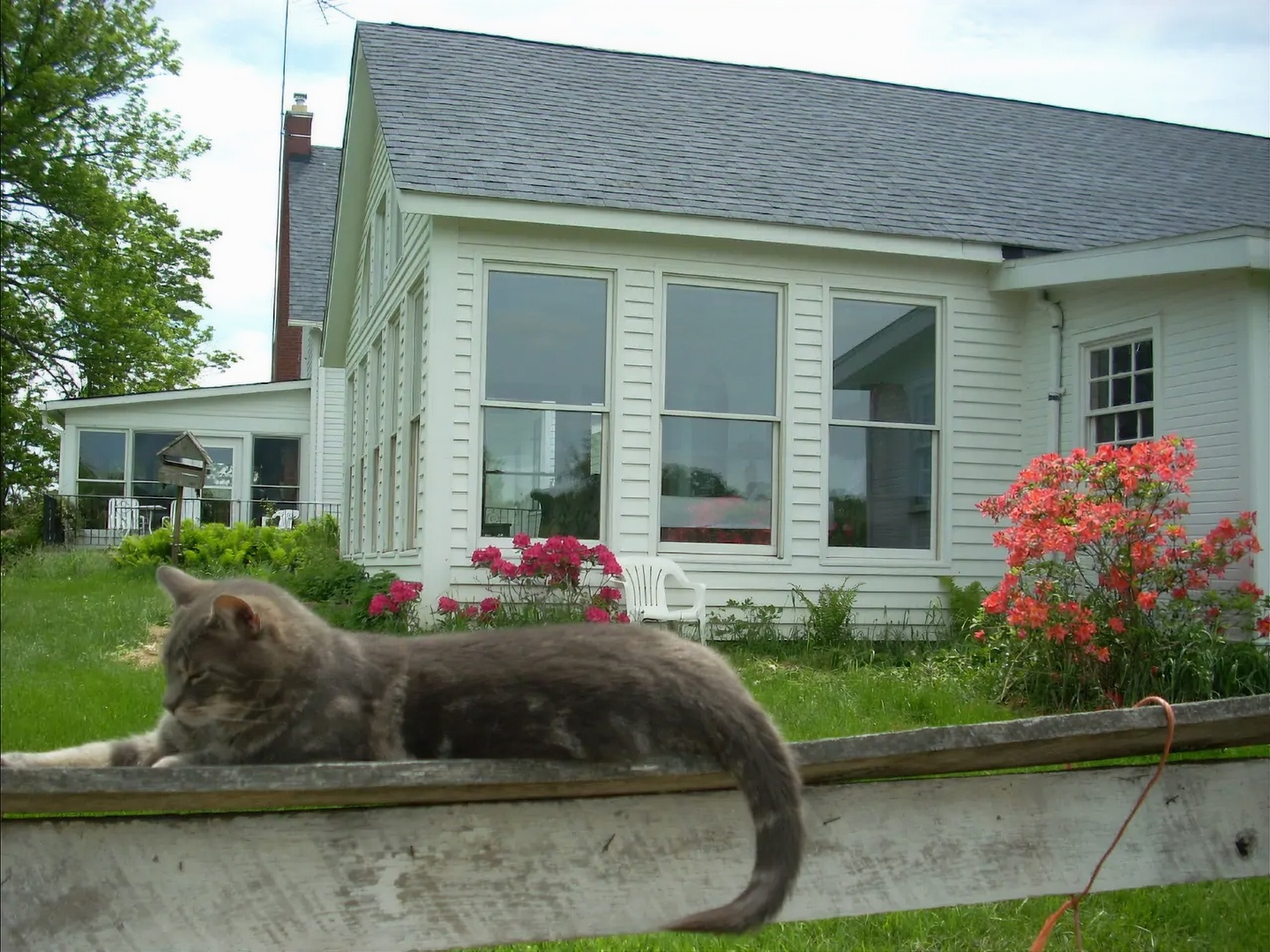A cat sitting on a bench in front of a house at The Sanctuary at Wild Rose Acres.