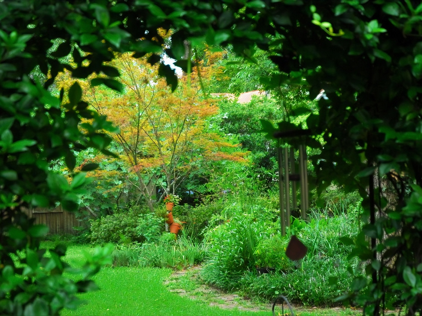 A close up of a lush green forest at C.W. Worth House Bed and Breakfast.