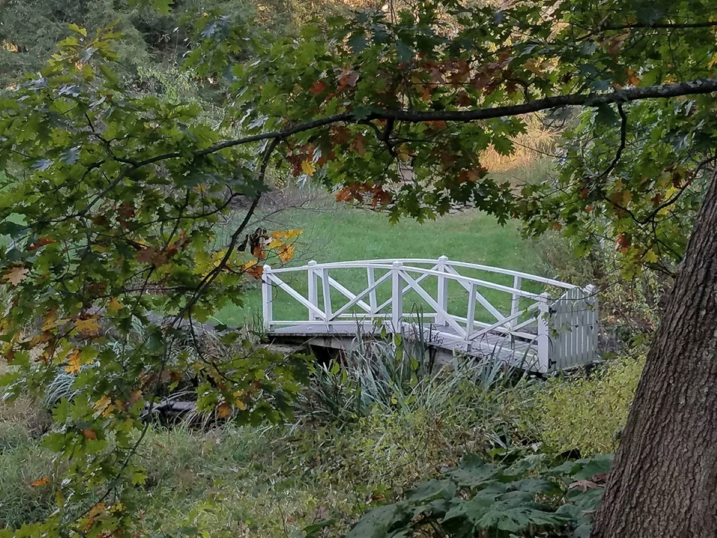 A bridge with grass and trees at Windflower Inn.