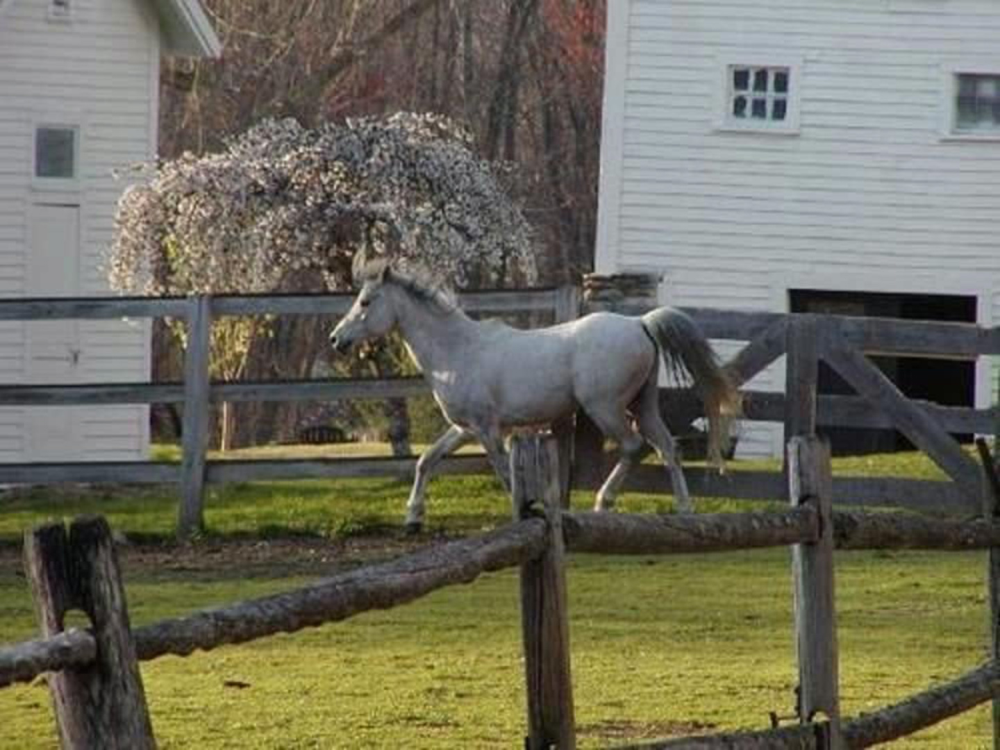 A horse standing on top of a wooden fence at Inn On The Horse Farm.