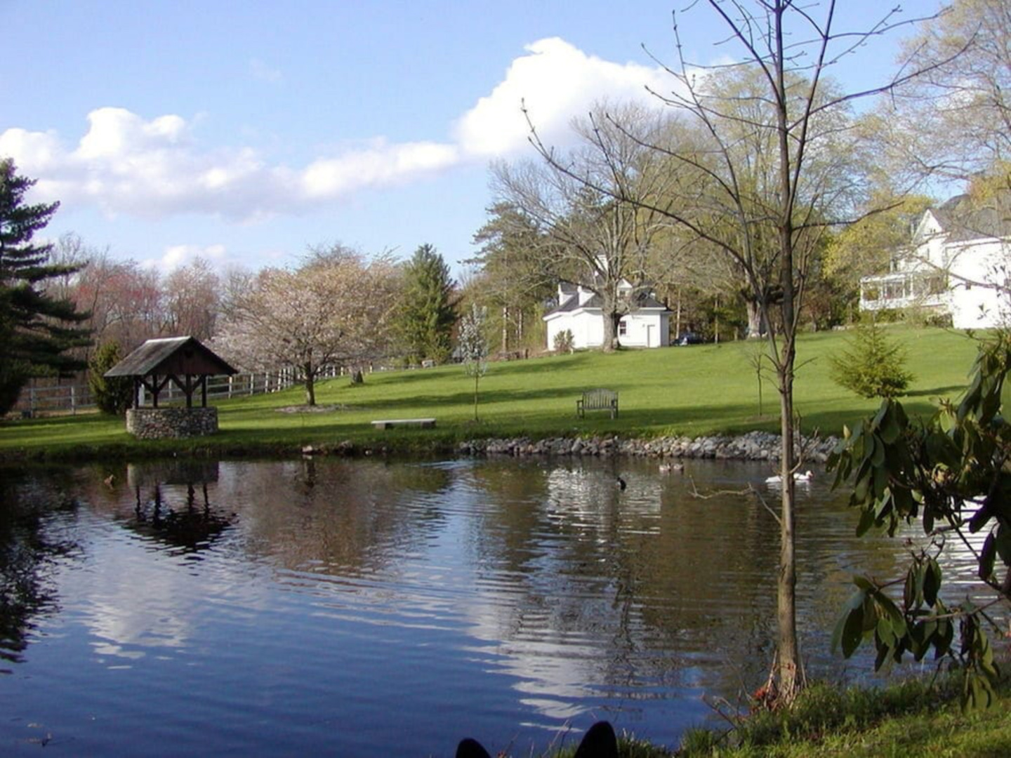 A body of water surrounded by trees at Inn On The Horse Farm.