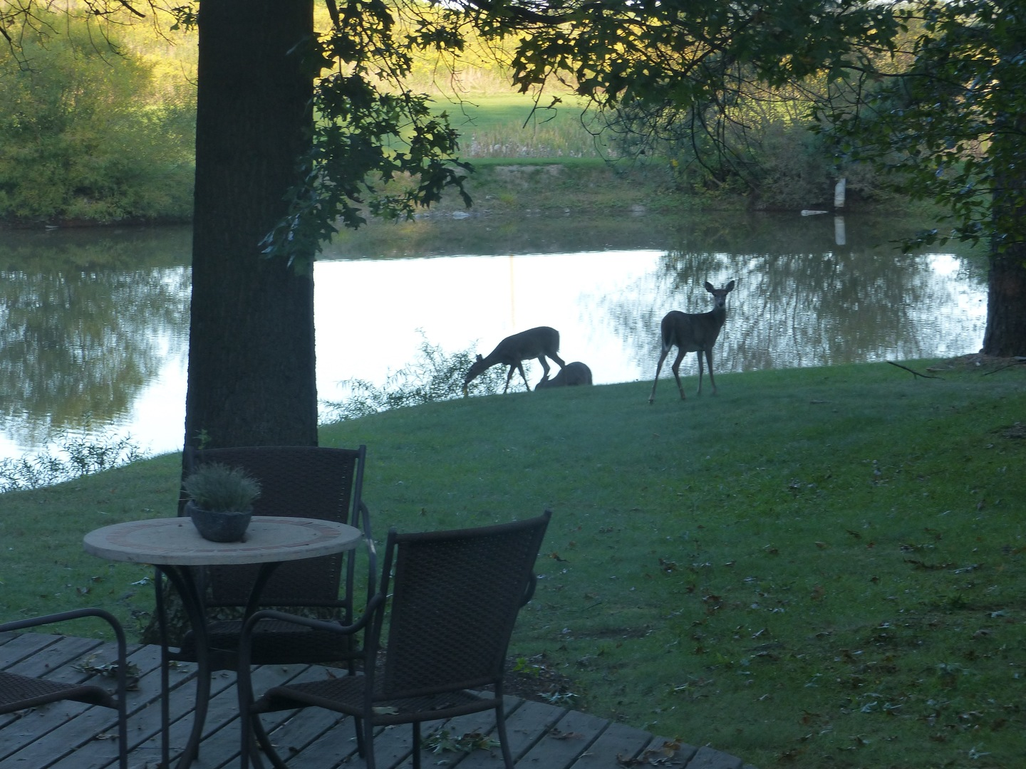A herd of animals standing on top of a grass covered field at The Inn at White Oak.
