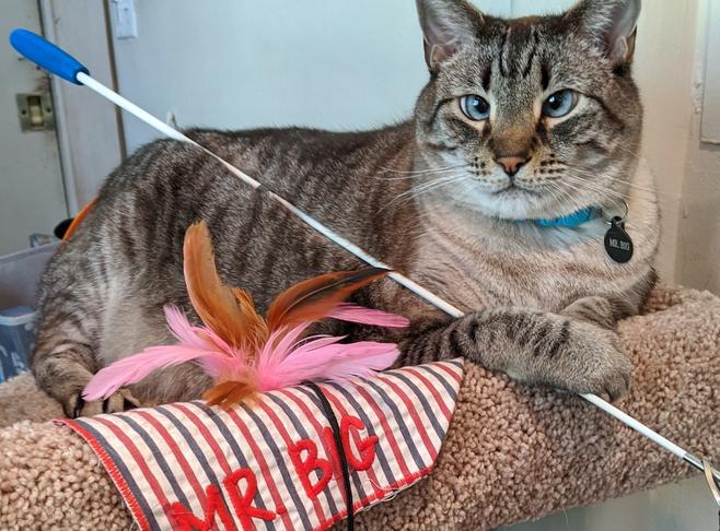 Mr. Big - Resident Inn Cat  Innkeeper Photo