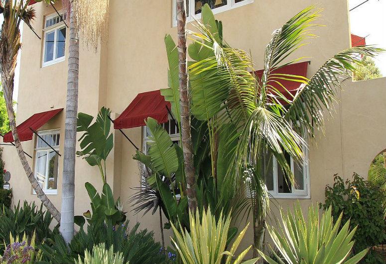 A palm tree at The Bed & Breakfast Inn at La Jolla.