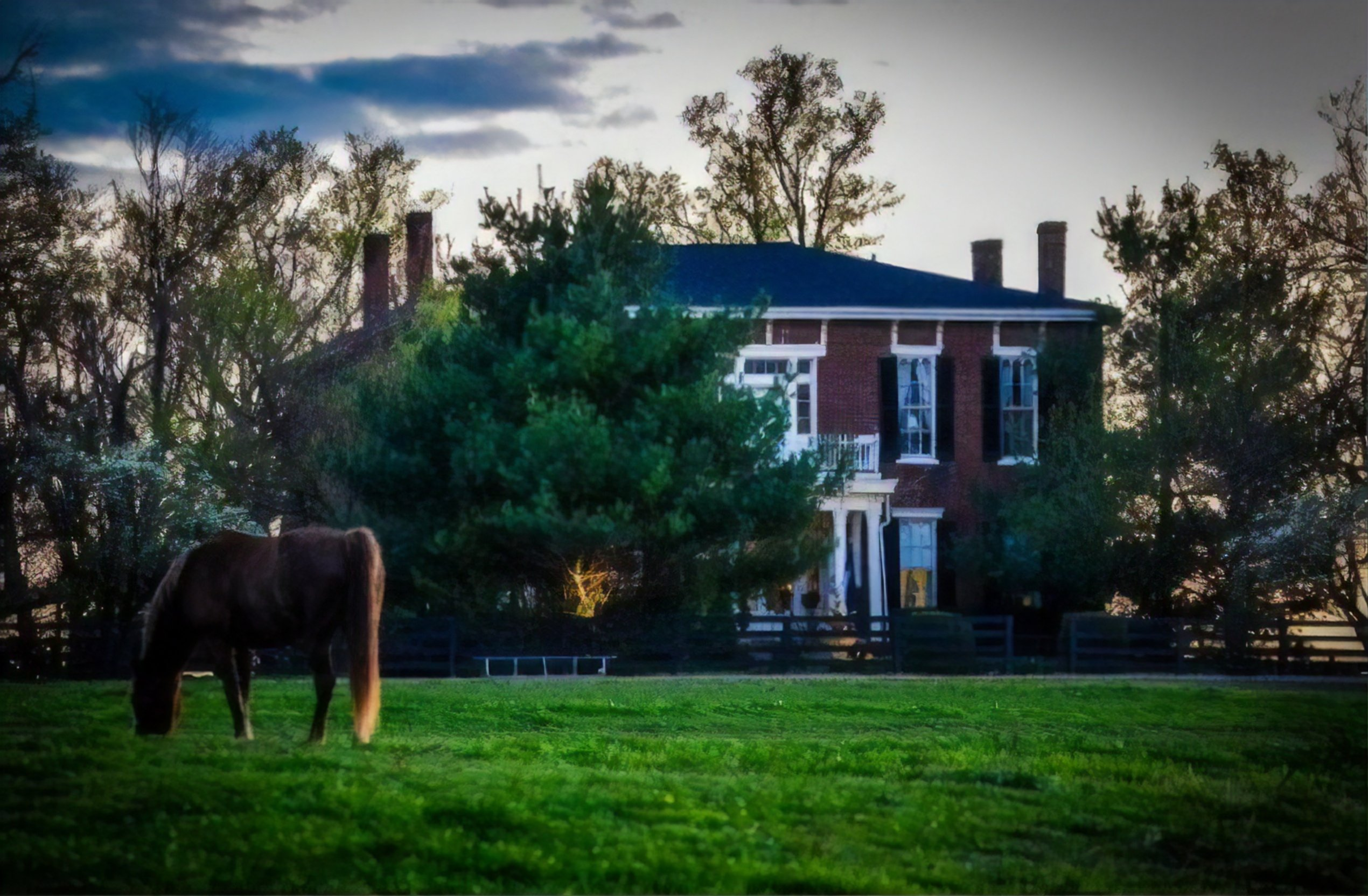 A cow grazing on grass in front of a house at Historic Maple Hill Manor B&B.