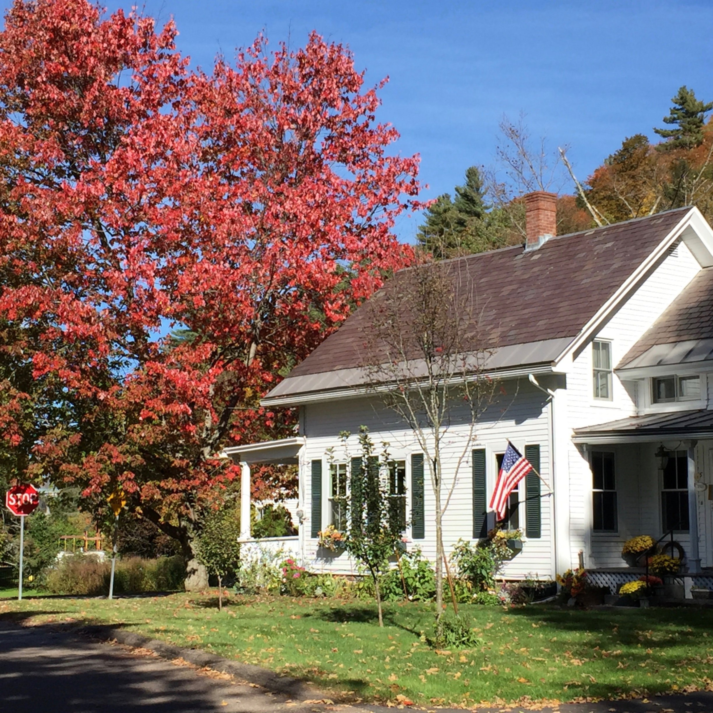 A tree in front of a house at Hobble Inn B&B, LLC.