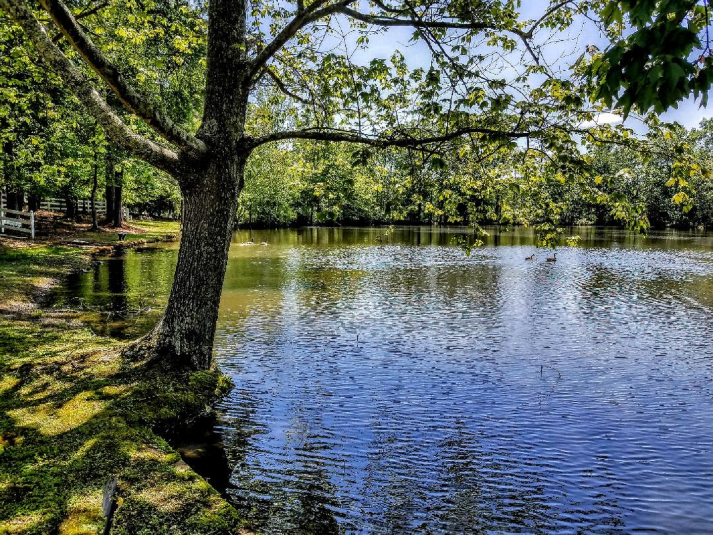 A body of water surrounded by trees at Stockbridge Lakes Bed & Breakfast.