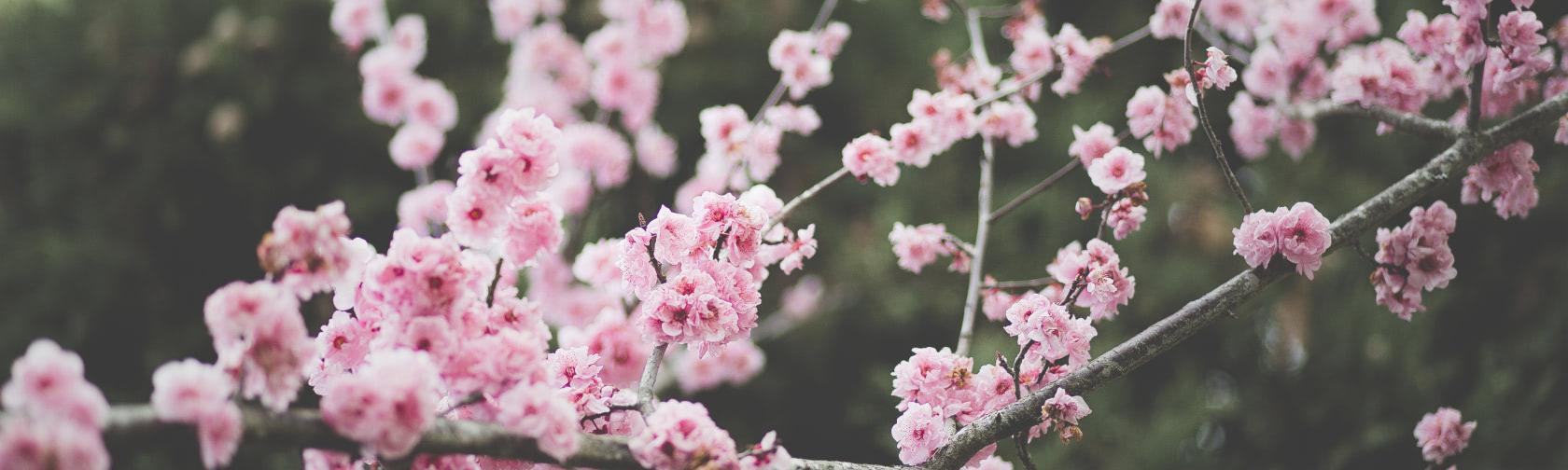 A close up of a flower at Hop & Vine Inn.