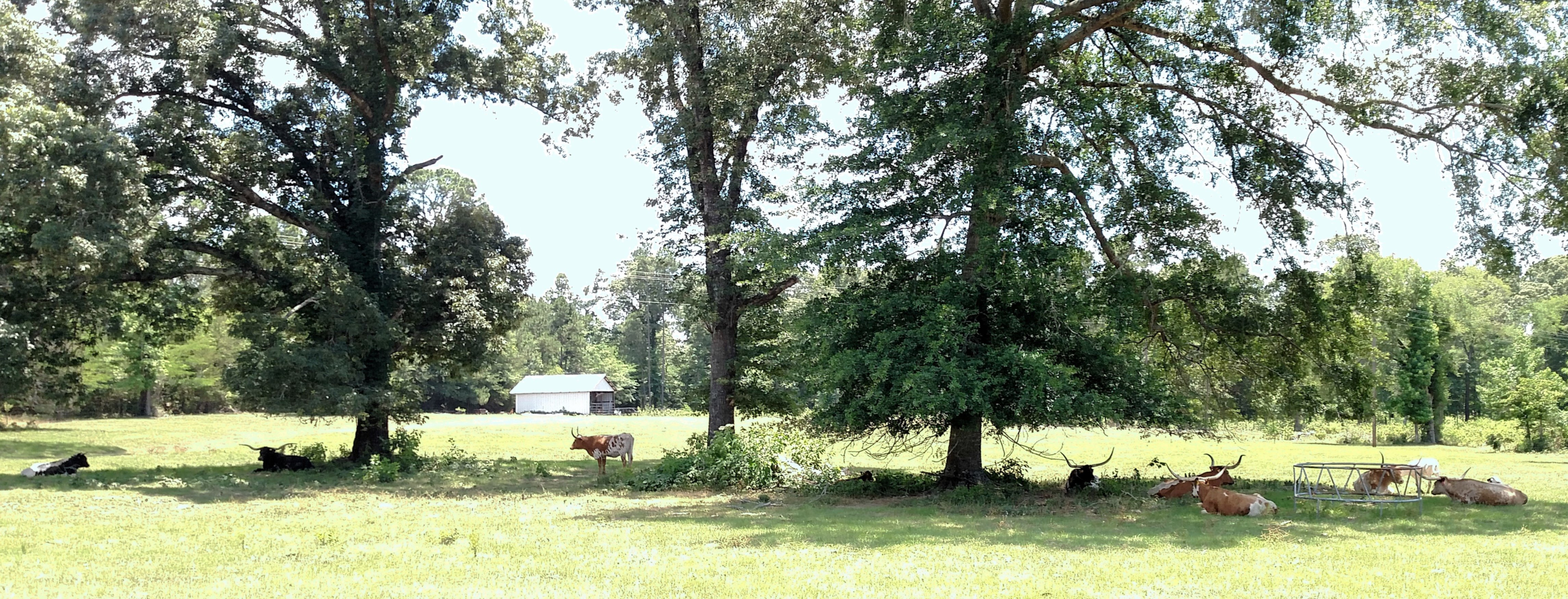 A large tree in a field at Beans Creek Ranch Cabin.