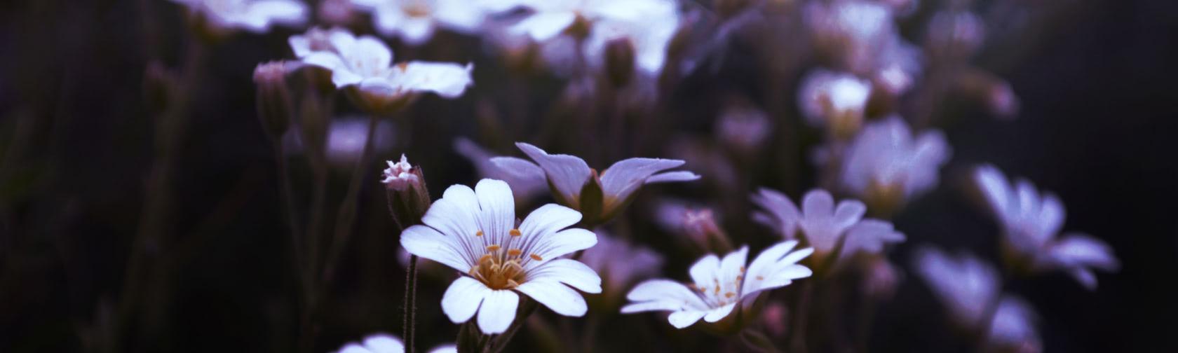 A close up of a flower at Yellow Farmhouse Inn.