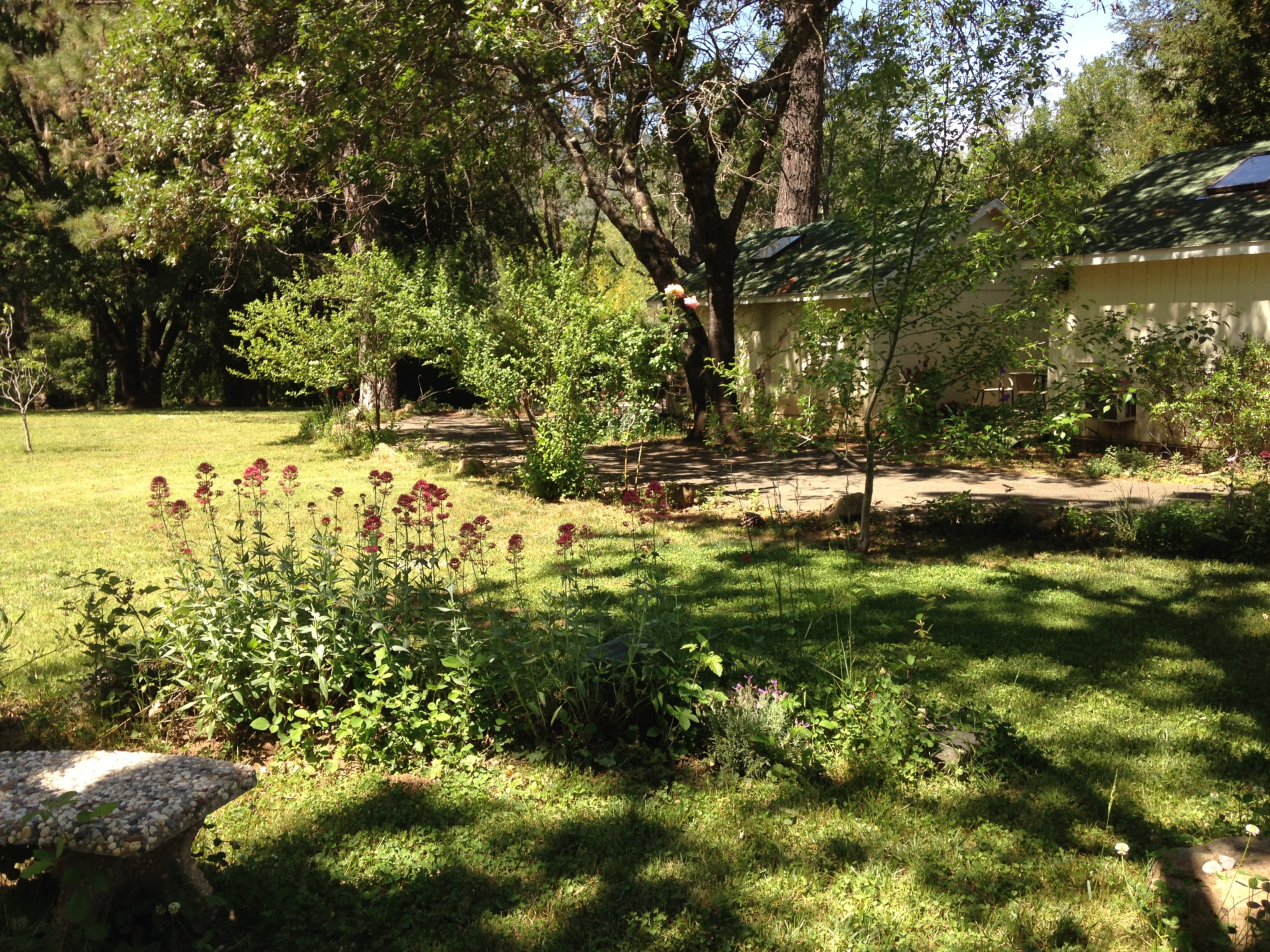 A tree in a field at Backyard Garden Oasis B&B.