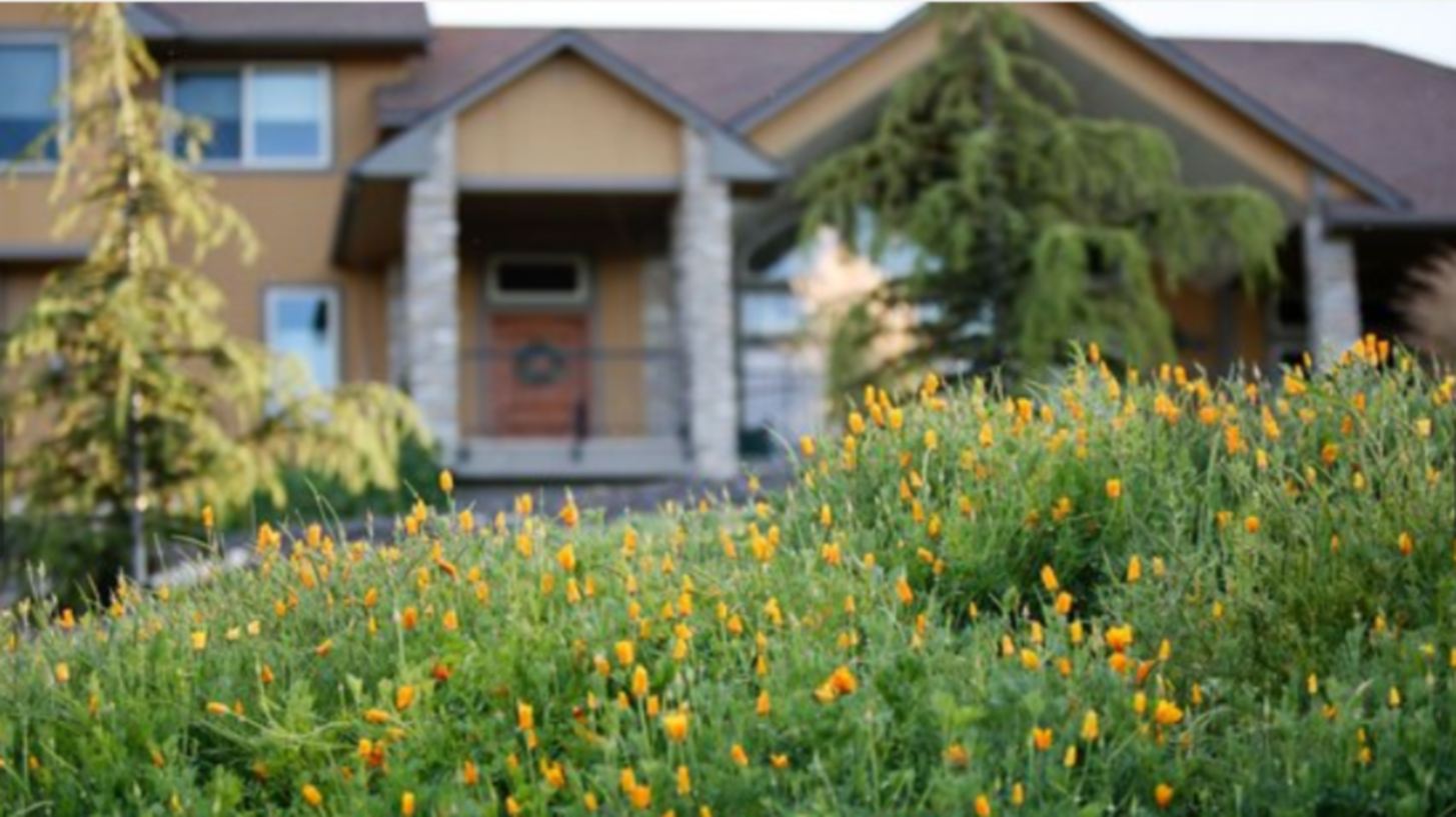 A yellow flower in front of a house at Bella Vista ID.