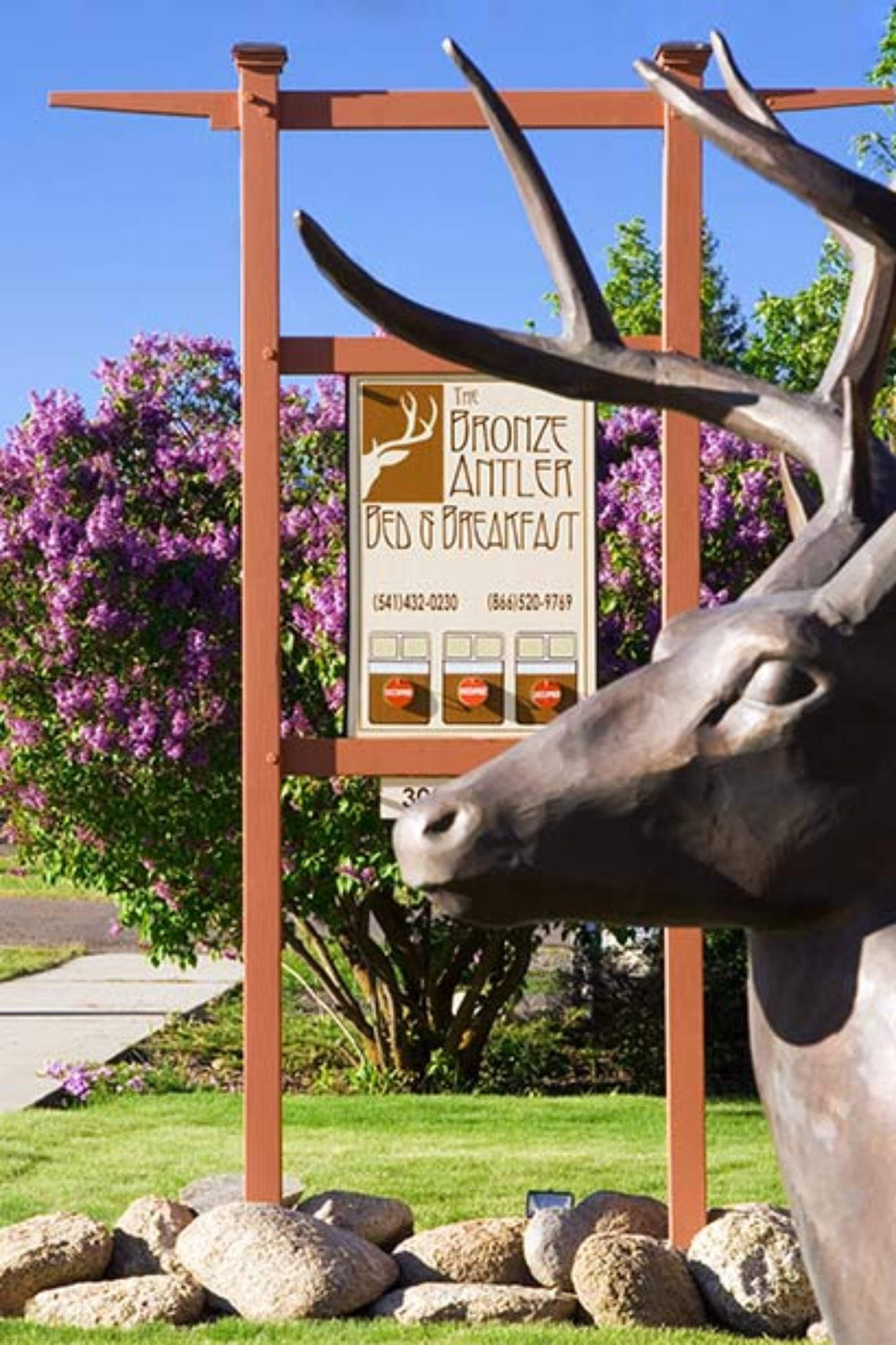 A cow is standing in front of a building at Bronze Antler Bed & Breakfast .