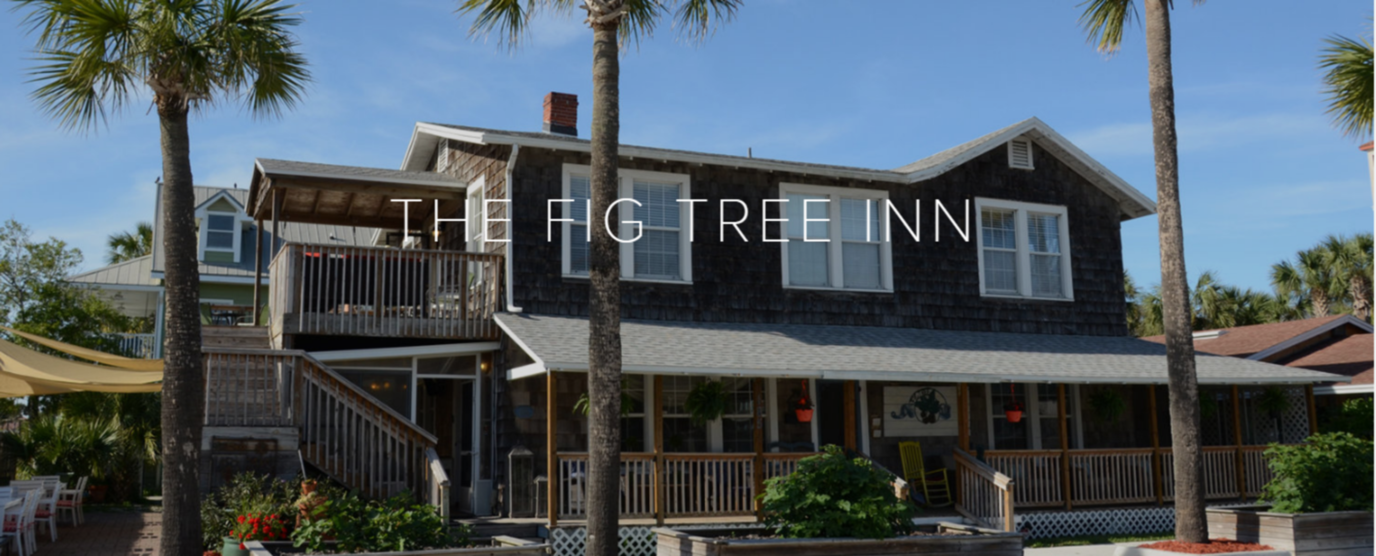 A palm tree in front of a house at Fig Tree Inn Bed & Breakfast.