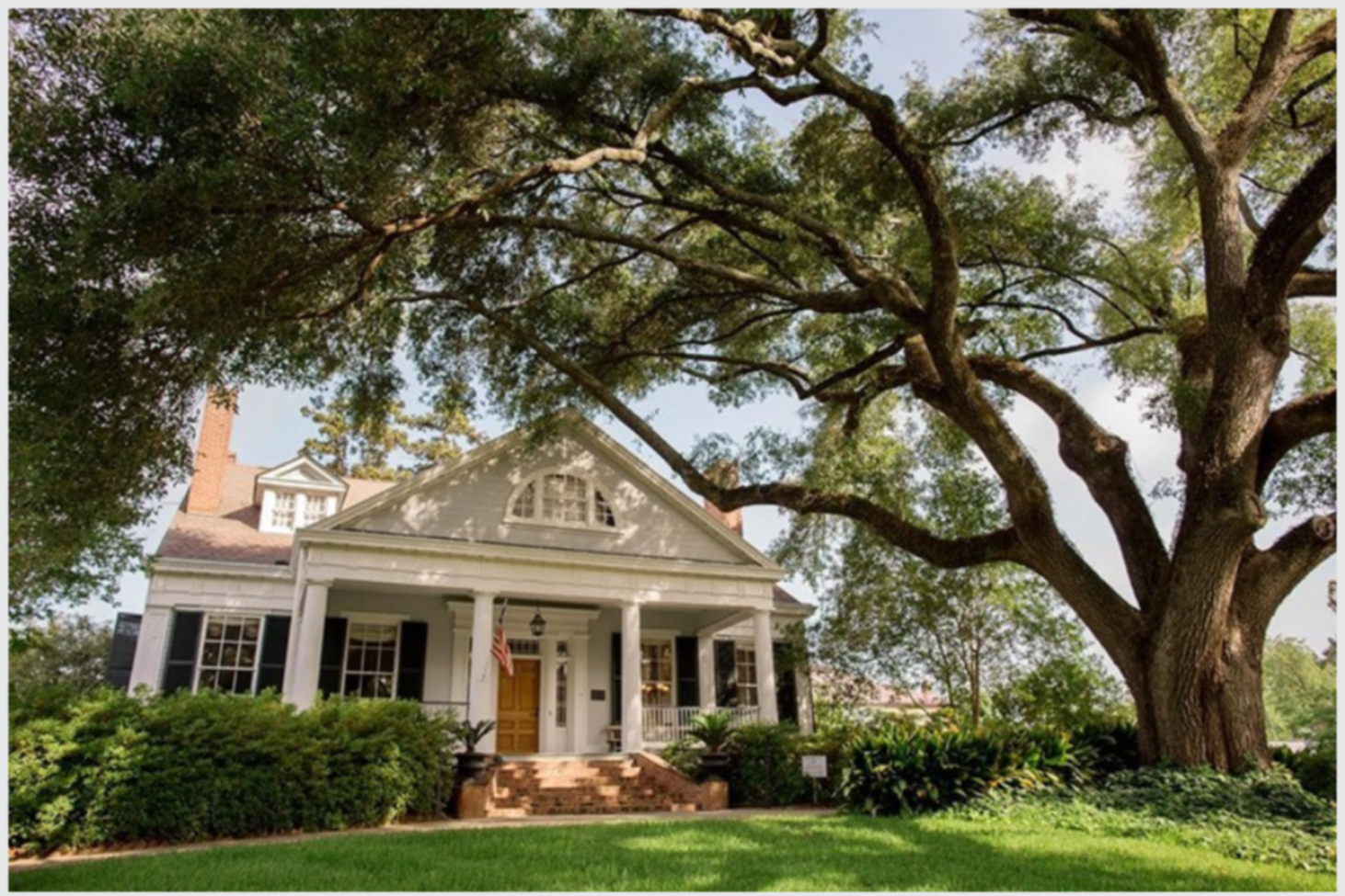 A large tree in front of a house at The Burn Antebellum Bed & Breakfast Inn.