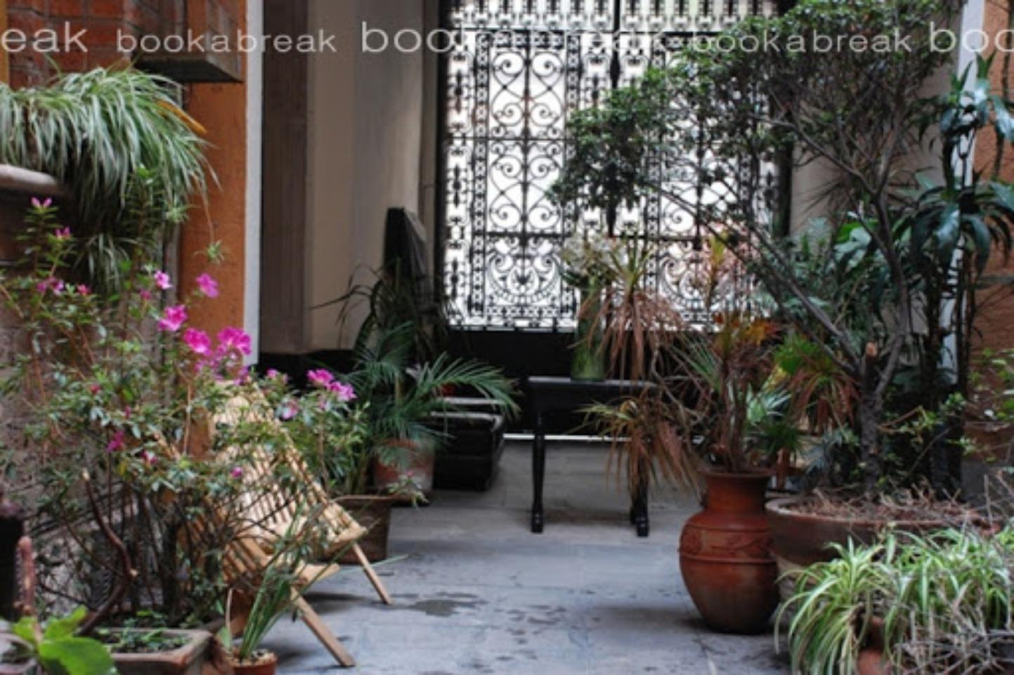 A plant in a garden at El Patio 77.