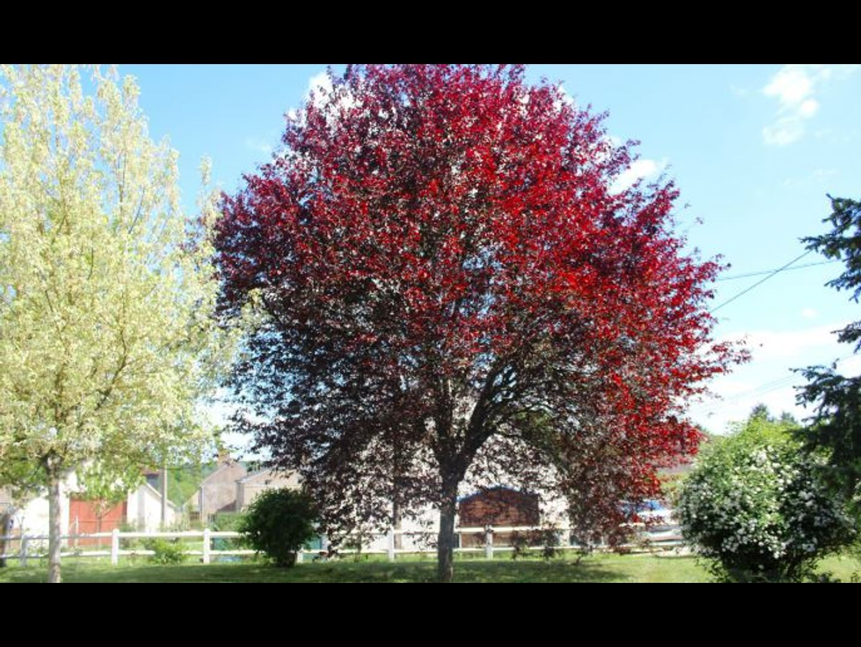 A close up of a tree at Le Clos des Roses Amboise.