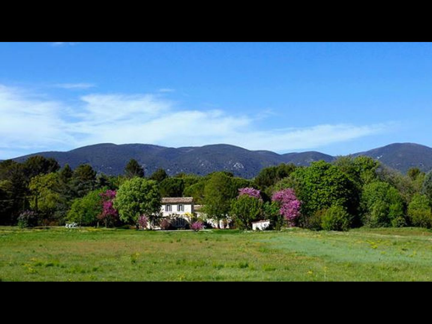A large green field with trees in the background at Maison Collongue, maison bio et vintage en Luberon.