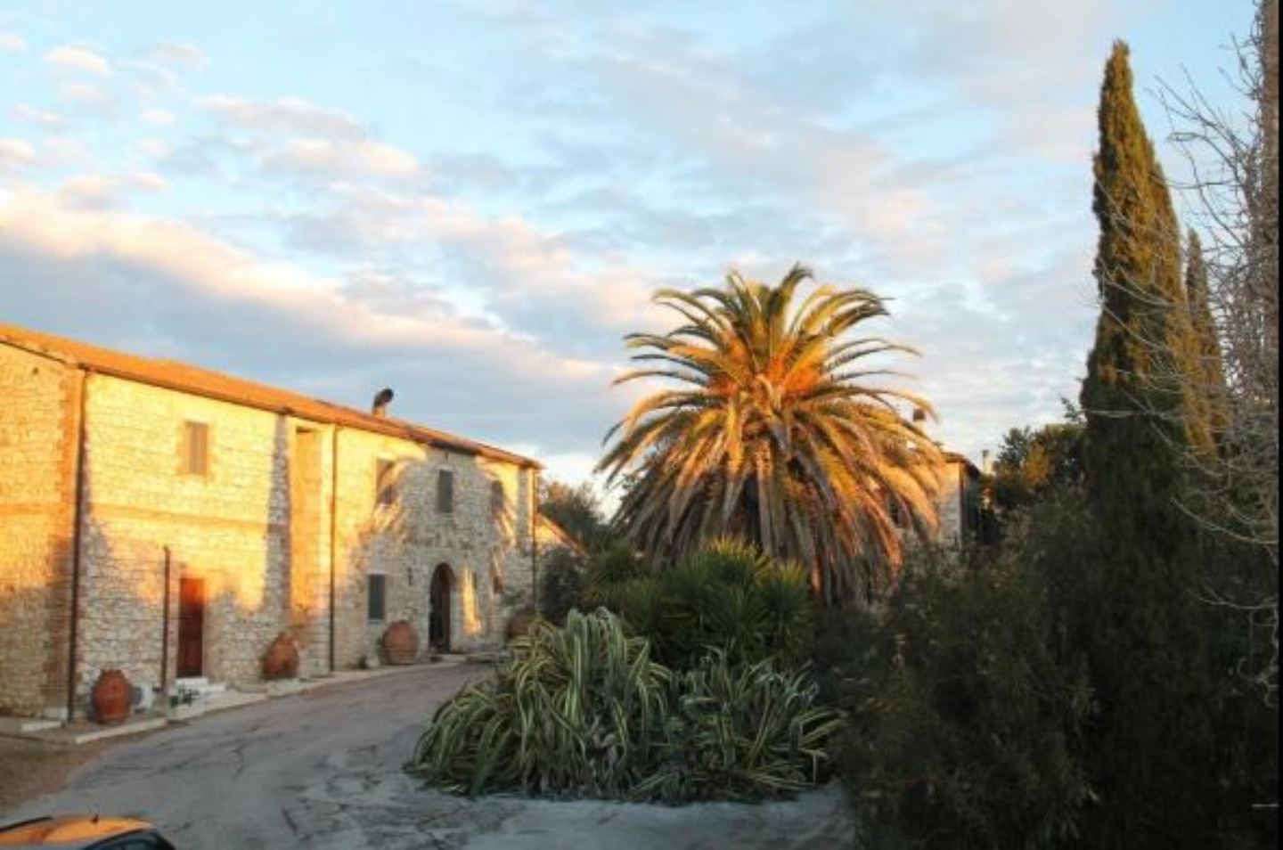 A group of palm trees with a building in the background at Agriturismo Case Cordovani.