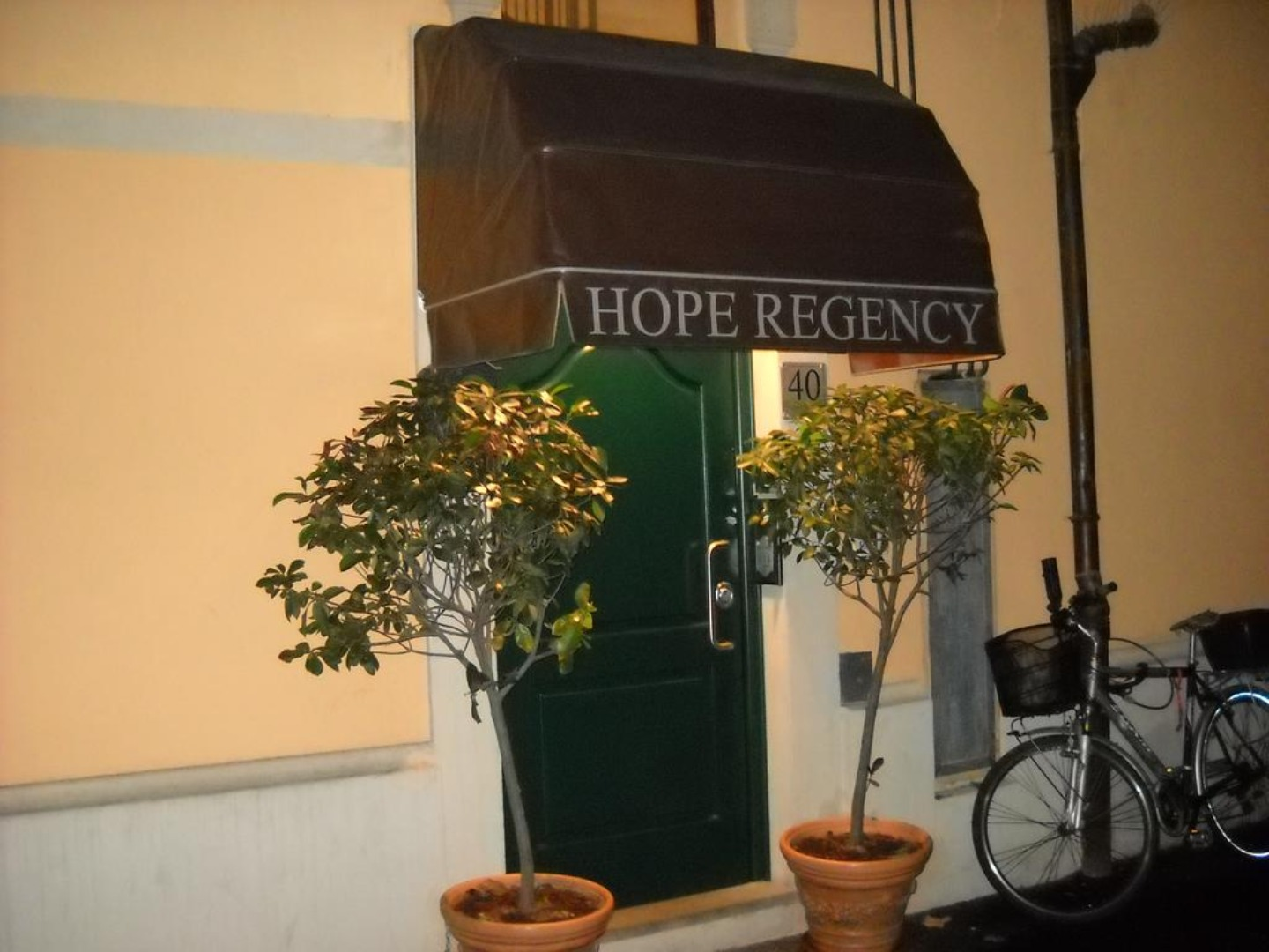 A plant in front of a window at HOPE.