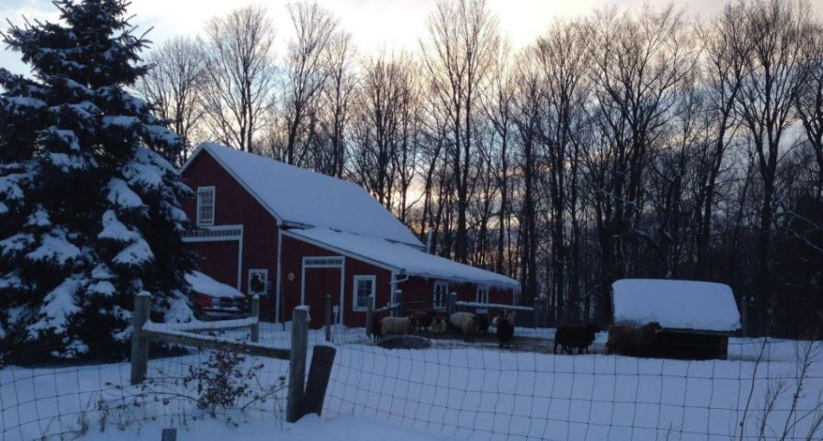 A house covered in snow at Bryn Meadow Farm B&B.