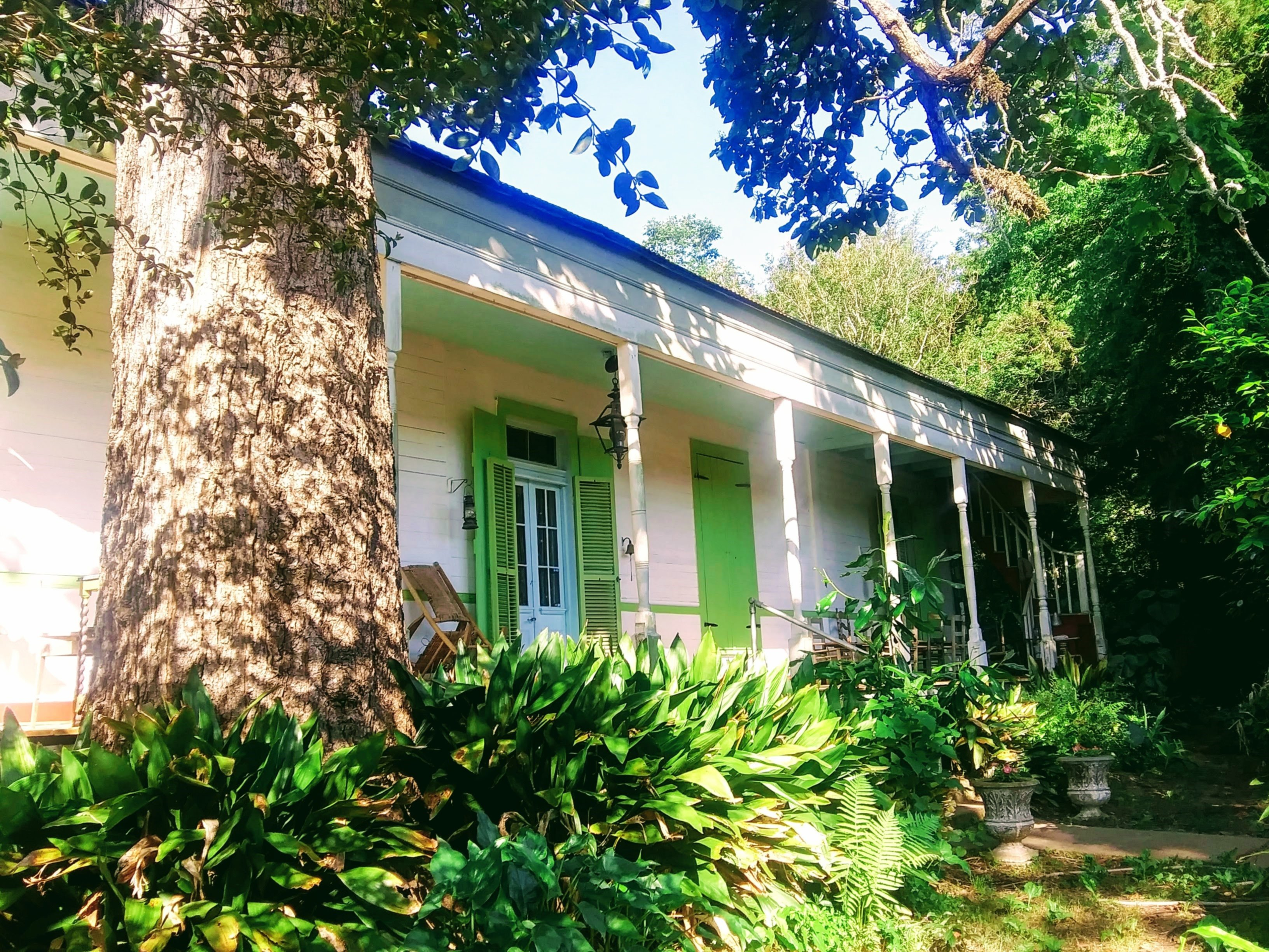 A house with bushes in front of a building at John LaFleur's Louisiana Creole Guesthouse.
