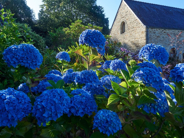 A close up of a flower garden at La Grange du Minuellou.