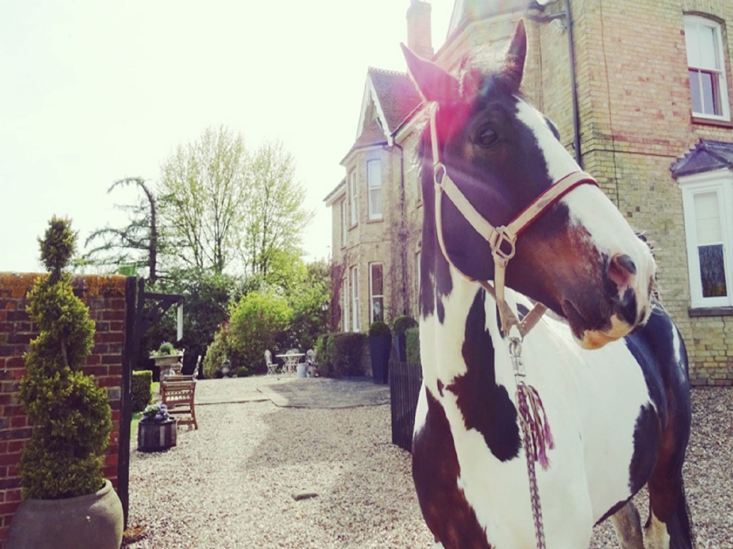 A brown horse standing in front of a building at Lodge Farm House B&B.