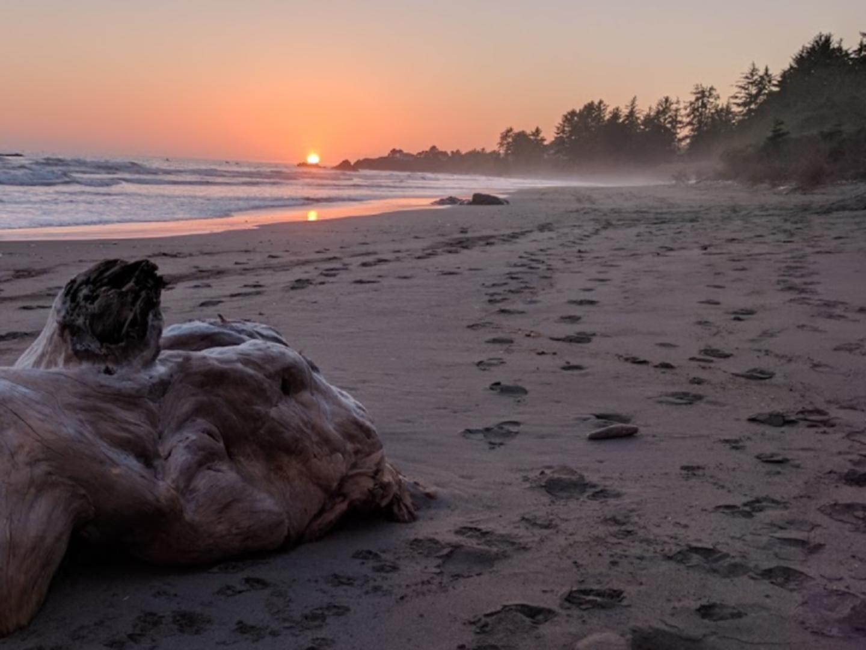A dog standing on a beach at Lowden's Beachfront B&B.