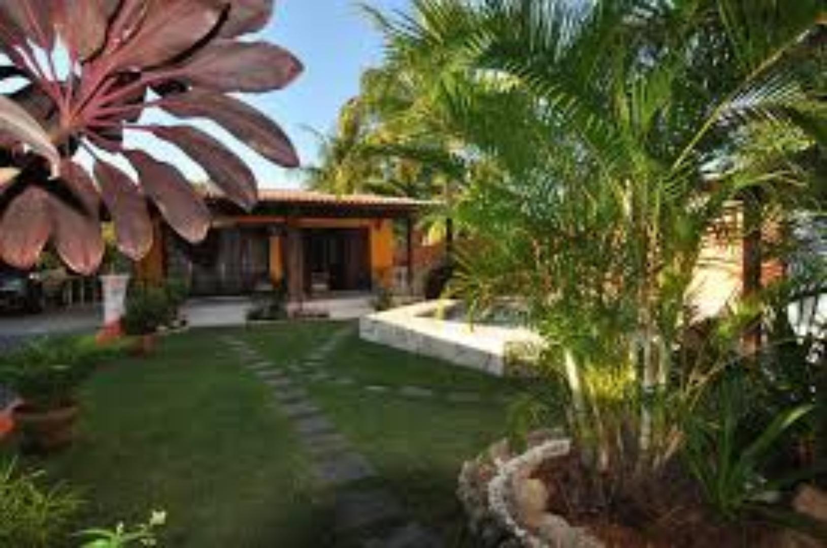 A palm tree at Casa Dois Gatos.