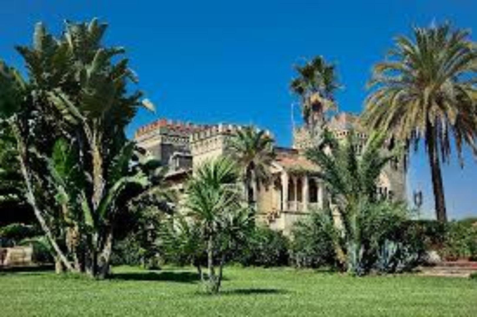 A palm tree at Castello D'Urso Somma B&B.